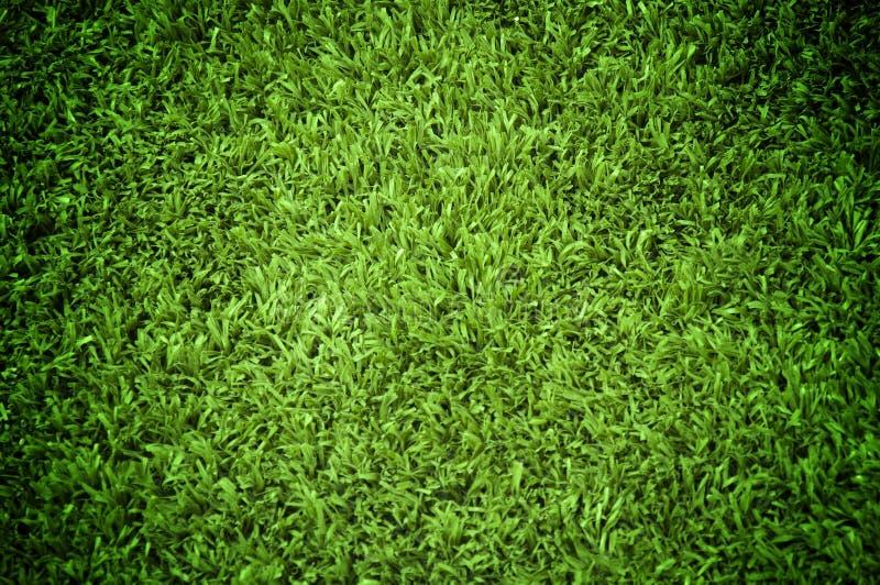 Texture d'herbe image libre de droits