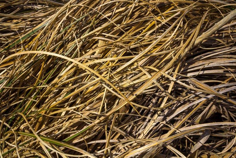 Texture d'herbe d'automne photo stock