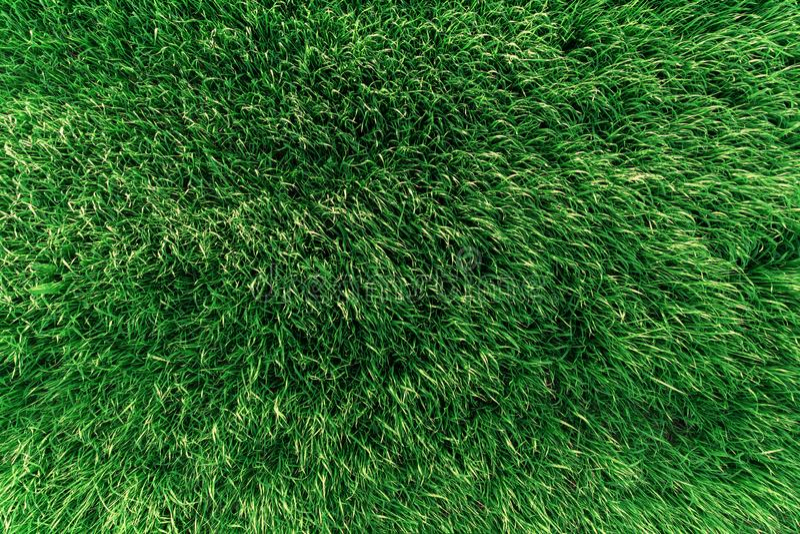 Texture d'herbe succulente verte sur le champ images stock