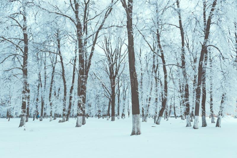 Texture d'hiver et fond givré image stock