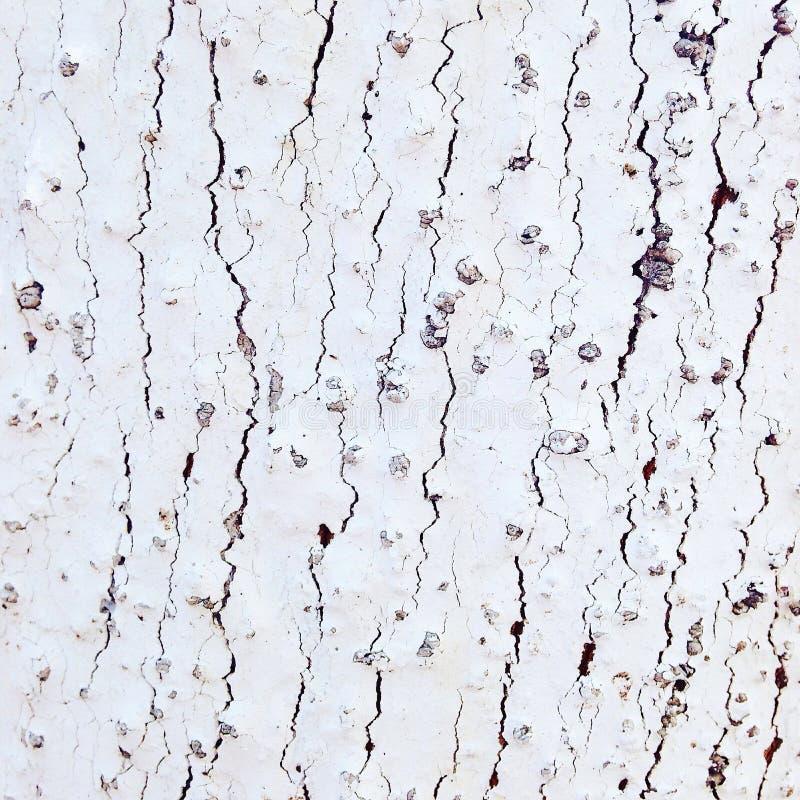 Texture d'un arbre image stock