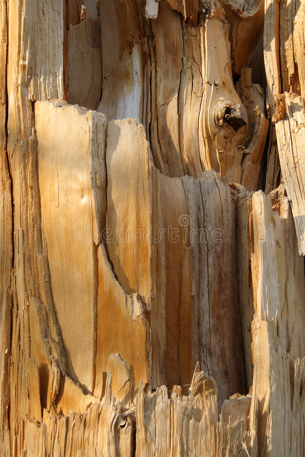 Texture d'un arbre cassé photos libres de droits