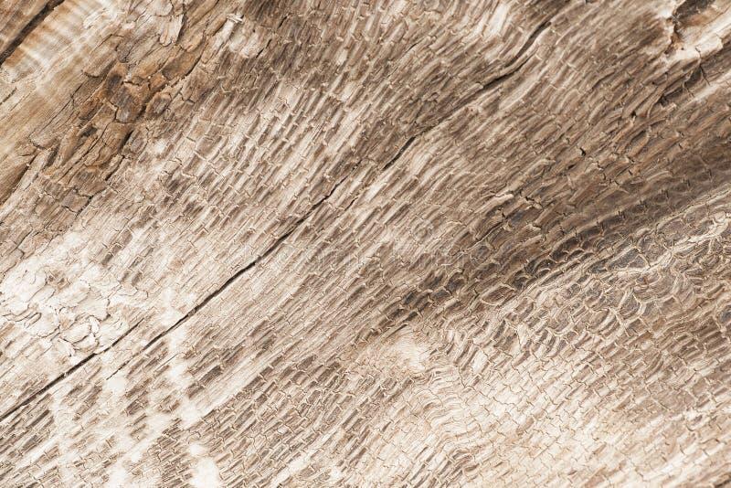 Texture d'un arbre, fond photographie stock libre de droits
