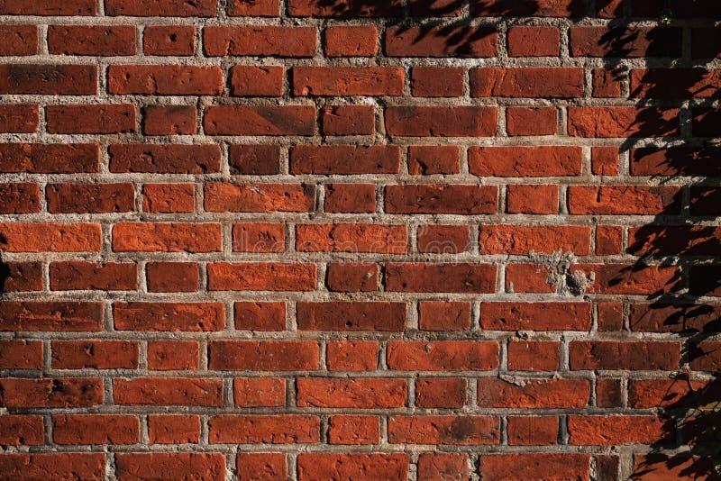 Texture d'un vieux mur de briques photos libres de droits