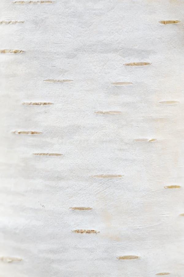Texture d'une écorce de bouleau d'un jeune arbre Macro wallpaper photos stock