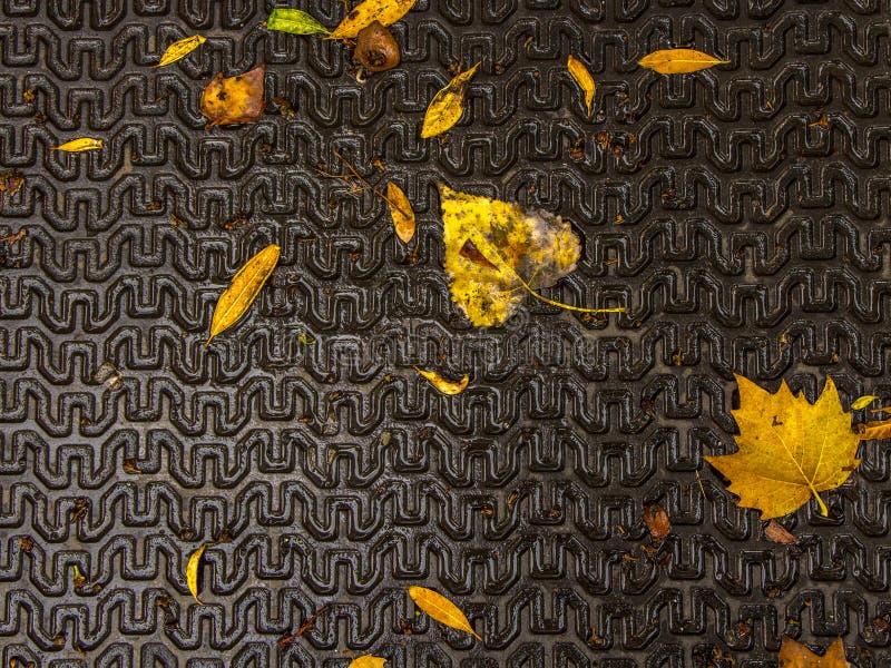 Texture de backgound en métal avec des feuilles d'automne illustration libre de droits