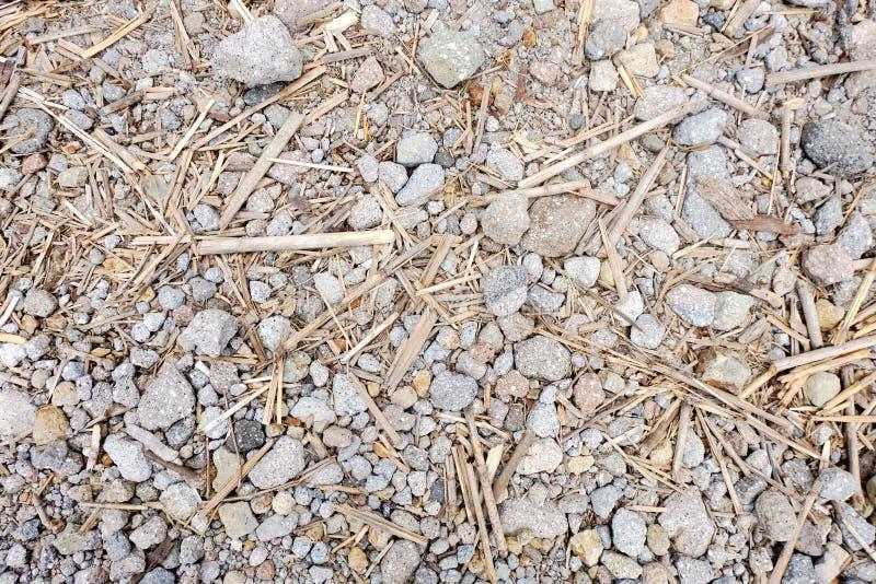 Texture de bambou/roche photos libres de droits