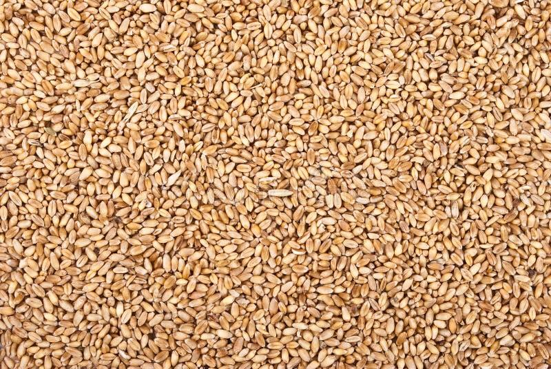Texture de blé photos stock