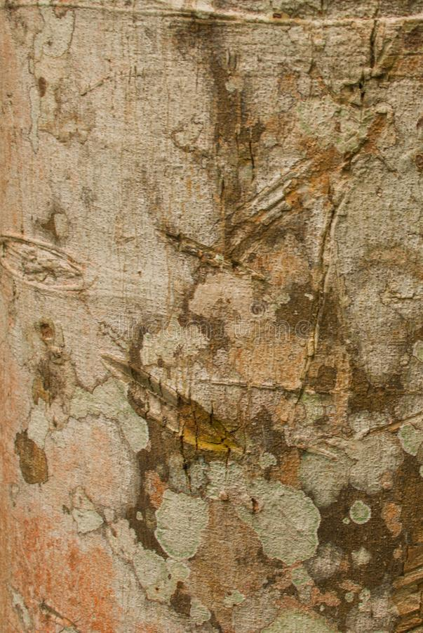 Texture de bois dans le plan rapproché de jungle Forêt tropicale Amazonas, Brésil d'Amazone image libre de droits