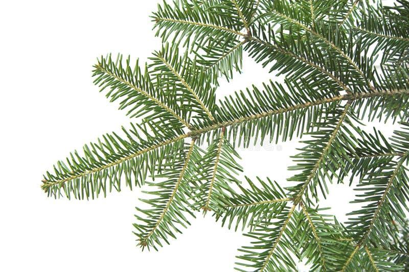 Texture de branchement de sapin de vert de fond de Noël images libres de droits