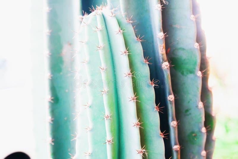 Texture de cactus d'épines Fin vers le haut des usines de cactus images stock