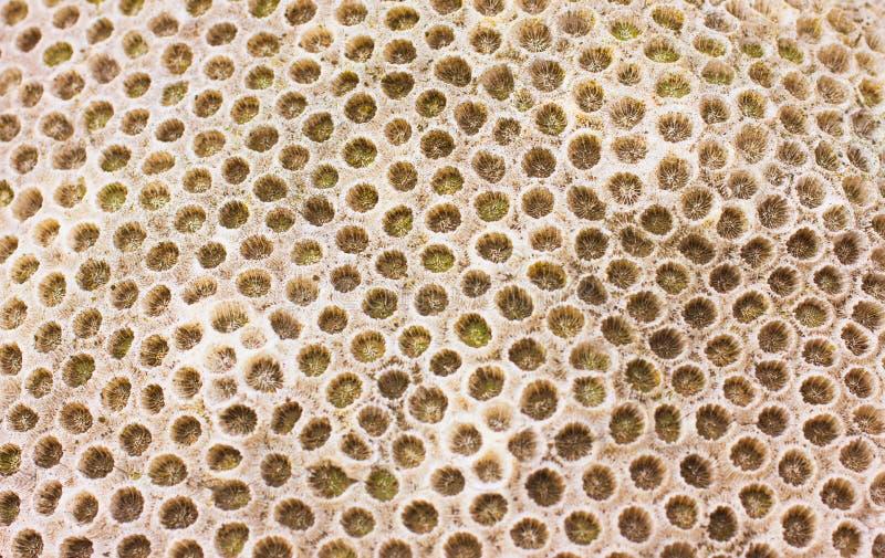 Texture de corail de roche photos libres de droits