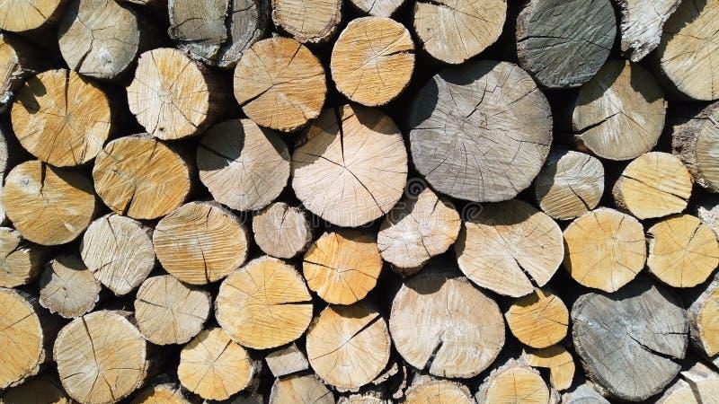 Texture de coupes en bois de chêne Fond de bois de charpente images stock