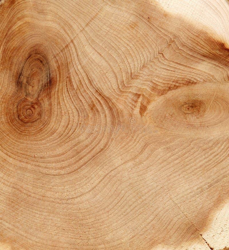 Texture de coupure en bois image stock