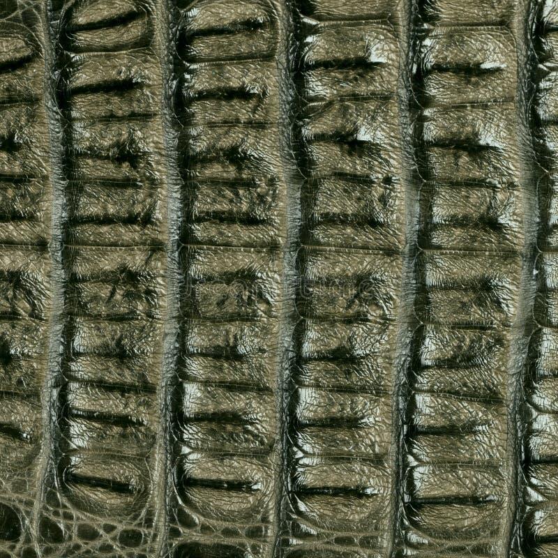 Texture de cuir de peau de crocodile photo libre de droits