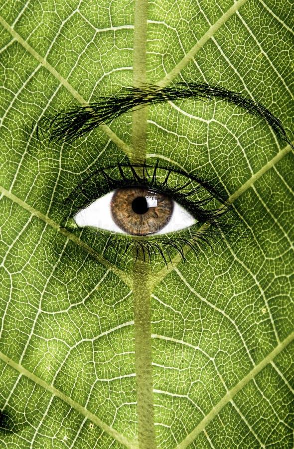Texture de feuille peinte sur le visage image stock