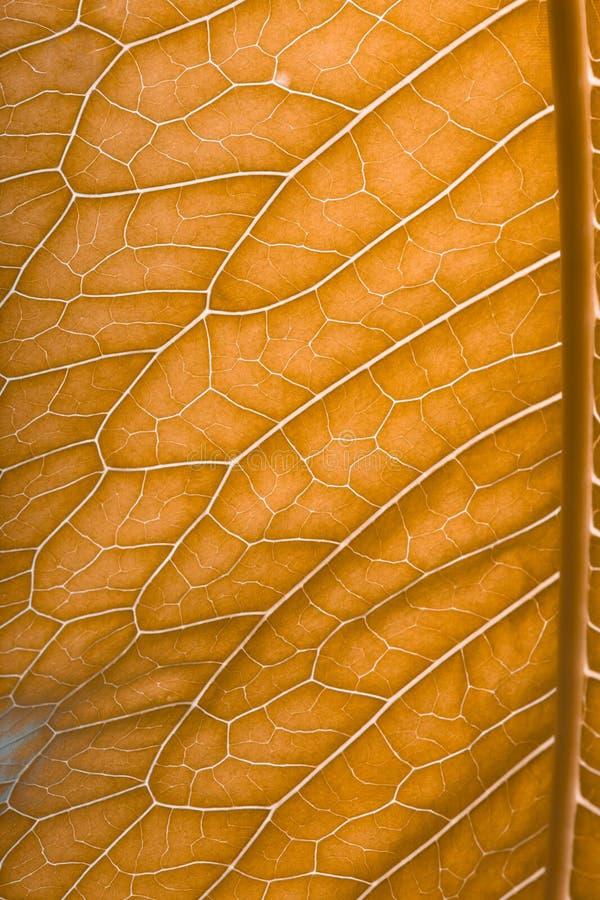 Download Texture De Feuille Verte Fraîche Pour Le Fond Naturel Toned Image stock - Image du normal, santé: 77151041