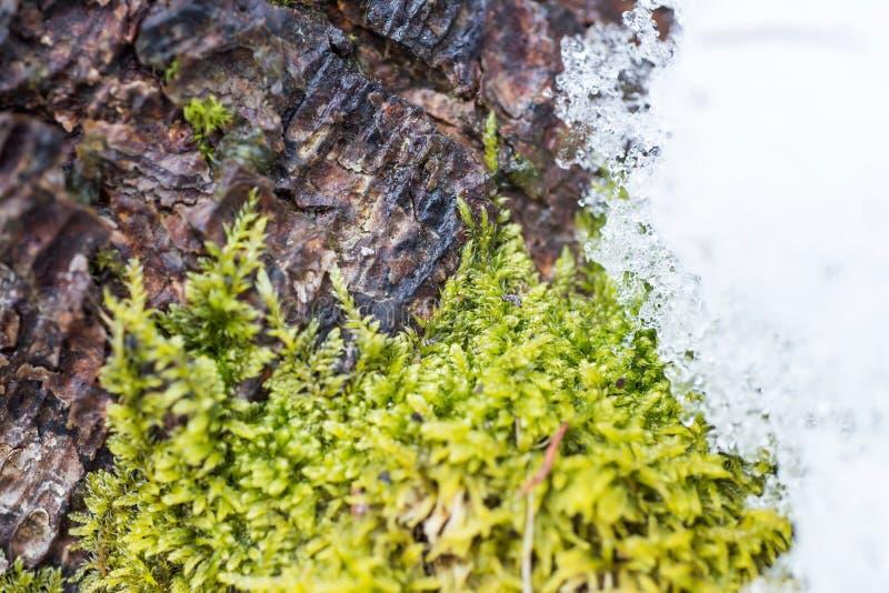 Texture de fond de la mousse sur l'écorce d'a images libres de droits