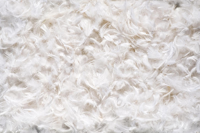 Texture de fond des feathes blancs mous photos libres de droits