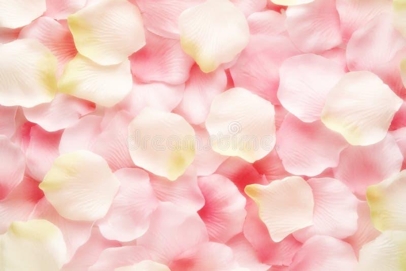 Texture de fond des pétales de rose roses et blancs image stock
