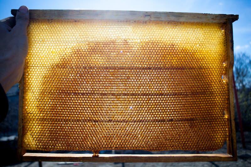 Texture de fond et modèle d'une section de nid d'abeilles de cire photo libre de droits