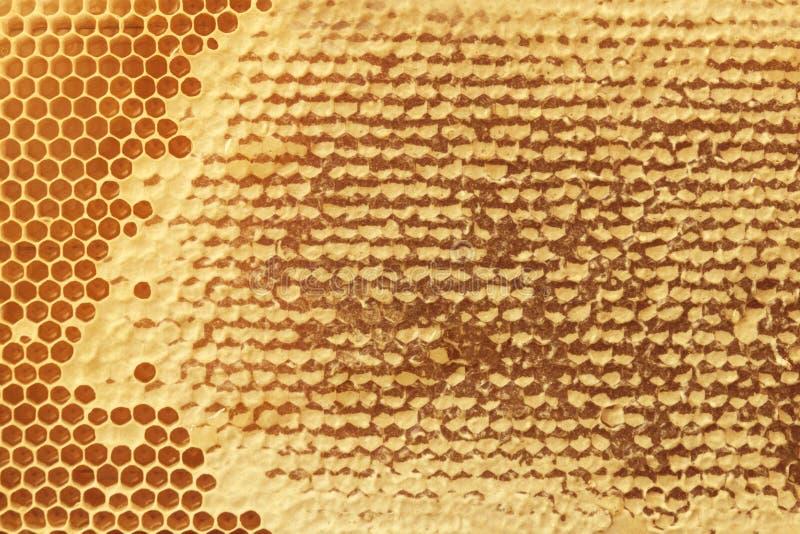Texture de fond et modèle d'une section de nid d'abeilles de cire pour images stock