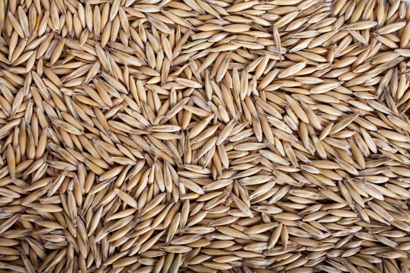 Texture de fond de graines d'avoine, vue sup?rieure image libre de droits