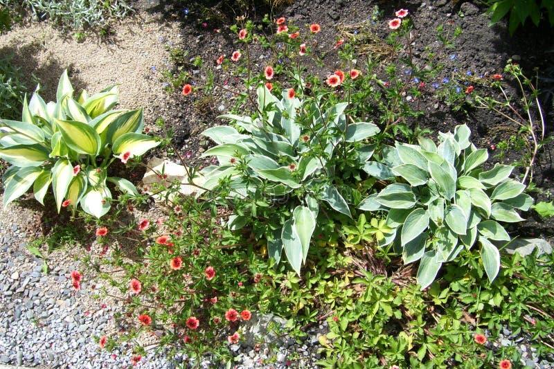 Texture de fond Herbe et fleurs photo libre de droits