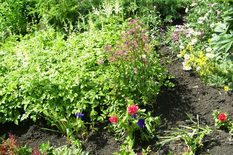Texture de fond Herbe et fleurs image libre de droits