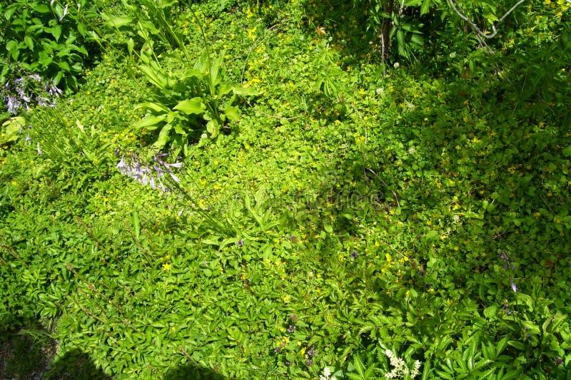 Texture de fond Herbe et fleurs photos libres de droits