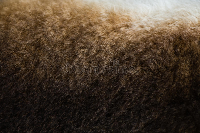 Texture de fourrure brune de lapin photo libre de droits