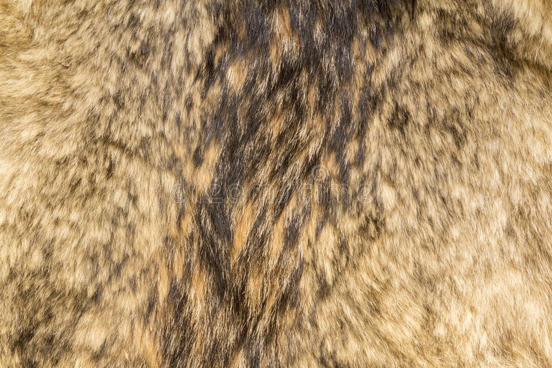 Texture de fourrure de loup images stock