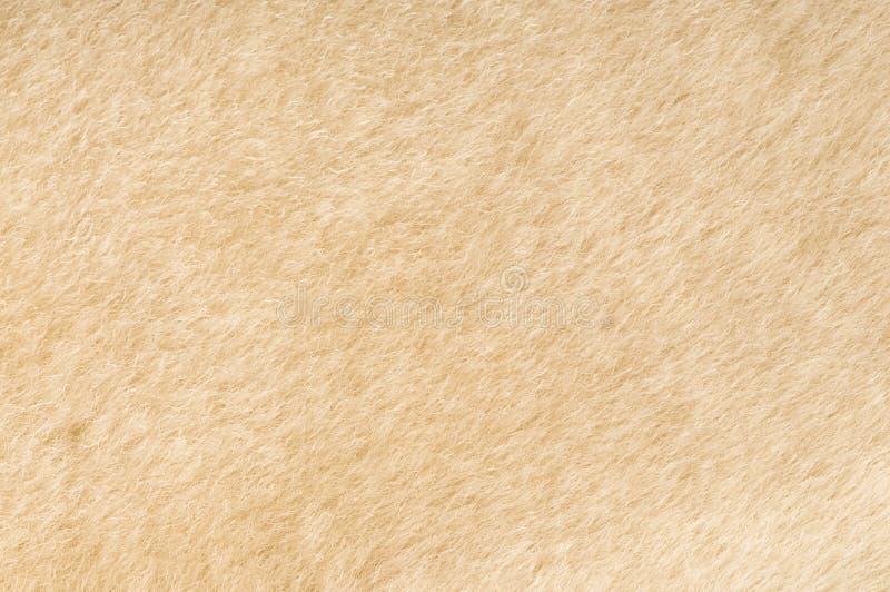 Texture de fourrure de moutons photographie stock