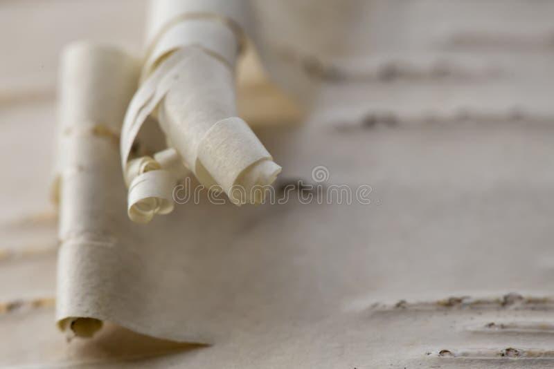 Texture de jeune ?corce de bouleau Macro wallpaper photo libre de droits