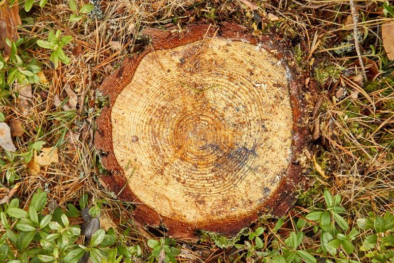 Texture de joncteur réseau d'arbre photo stock