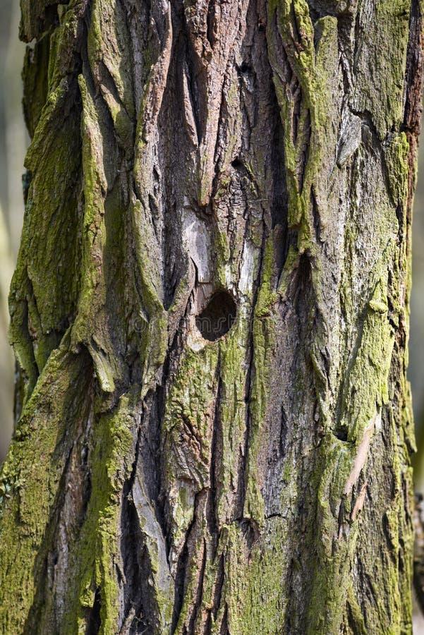 Texture de l'écorce d'un vieil arbre Texture de l'écorce d'un vieil arbre illustration stock