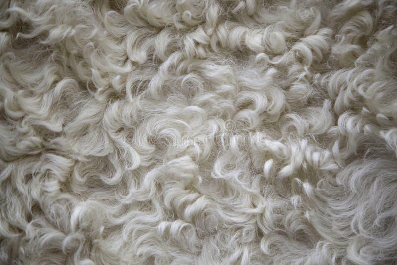 Texture de laine de moutons photo stock