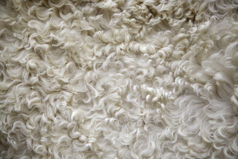 Texture de laine de moutons photos libres de droits