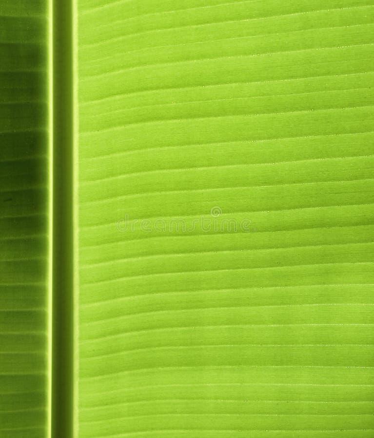 Texture de lame de banane photos stock