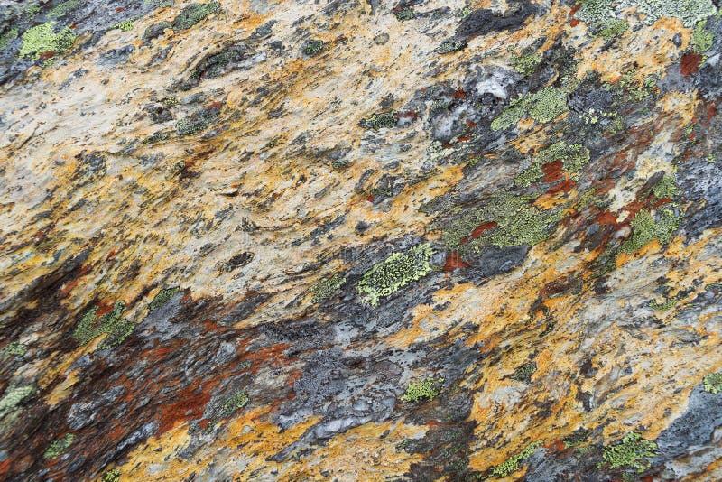 Texture de lichen sur la pierre image stock