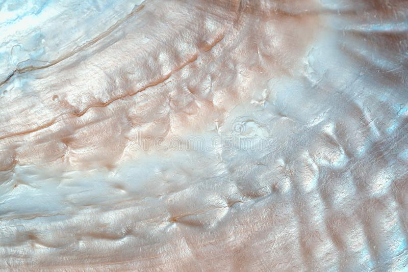 Texture de luxe de fond de coquillage de nacre photos libres de droits