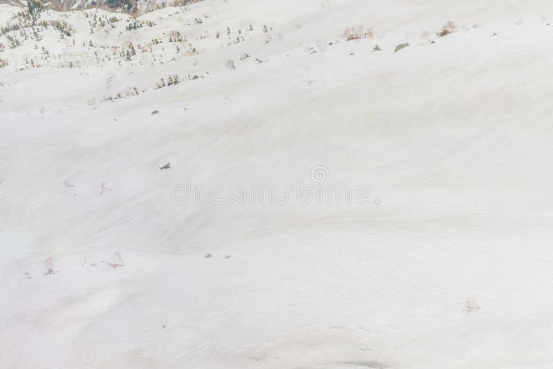 Texture de Milou images stock
