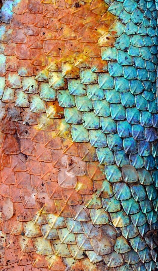 Texture de modèle de peau de dragon images libres de droits