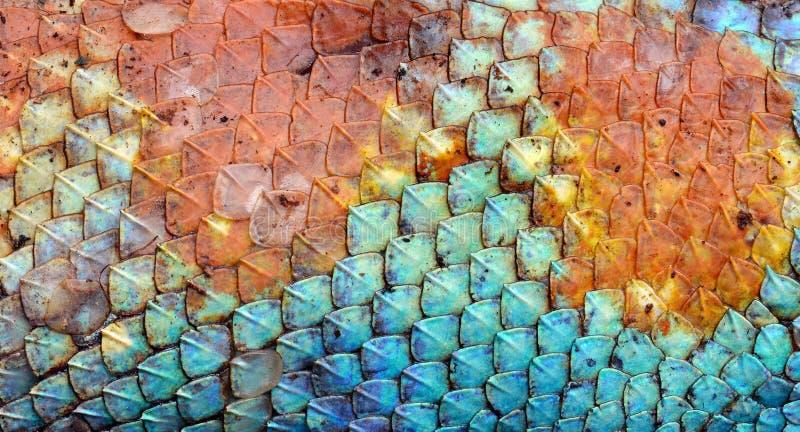 Texture de modèle de peau de dragon image stock