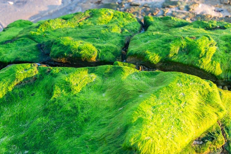 Texture de mousse sur la plage image libre de droits