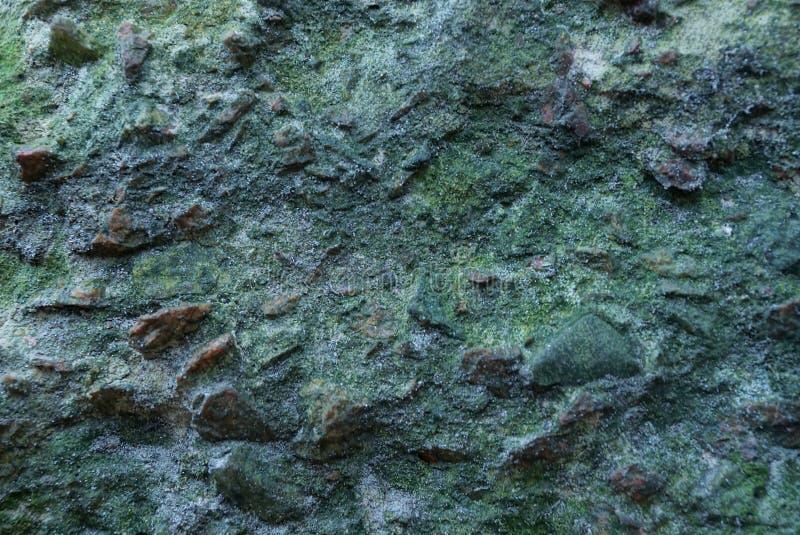 Texture de mur vert en béton gris de pierre image stock