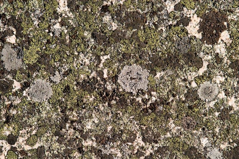 Texture de mycète de roche image stock