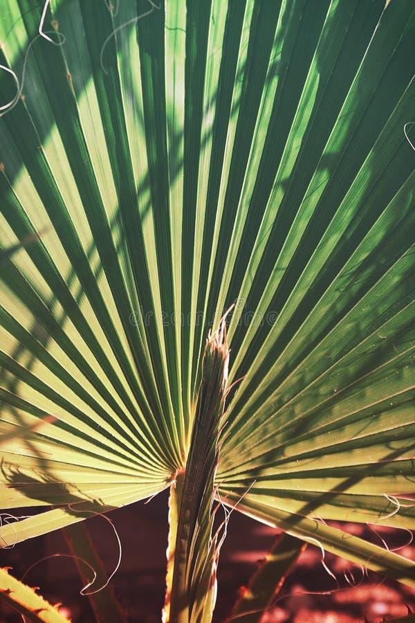 Texture de palmette avec la couleur vibrante de gradient photo libre de droits