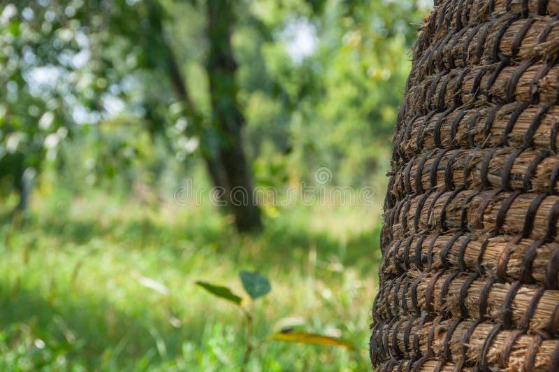Texture de panier d'osier ou de rotin Panier pour la paille, plan rapproché images libres de droits