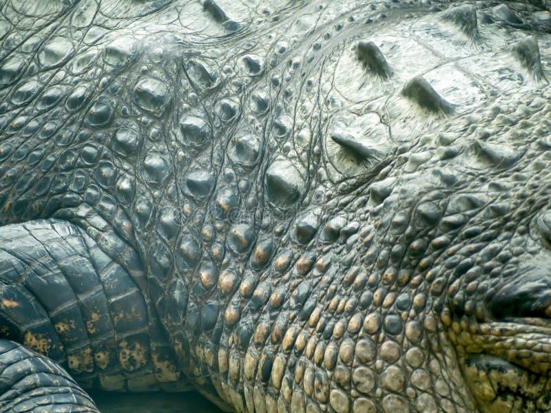 Texture de peau de crocodile image stock